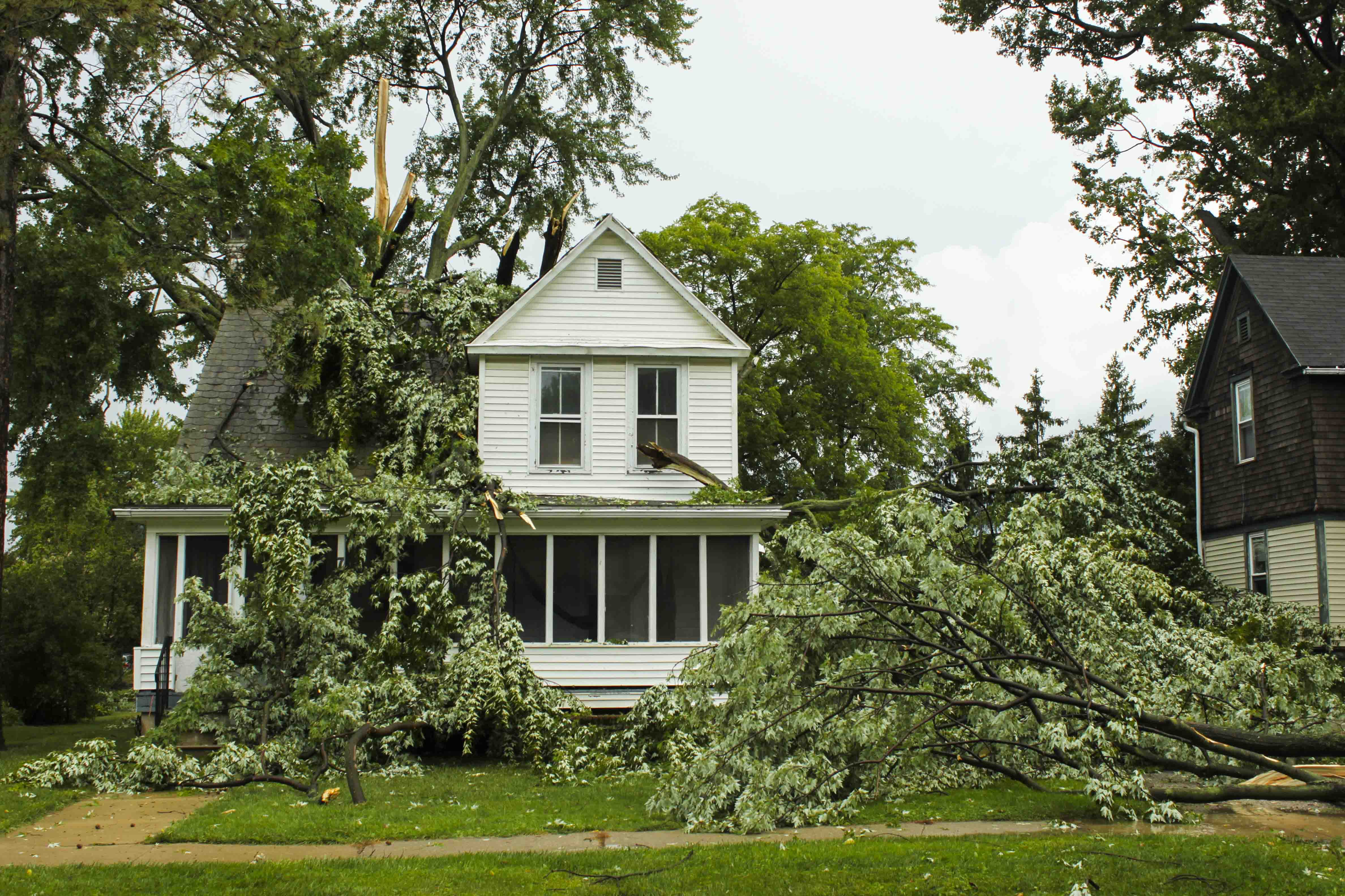 Several trees drape the house at 70 North Pleasant Street Saturday. The microburst knocked down several power lines and left over 3,000 Oberlin residents without power.