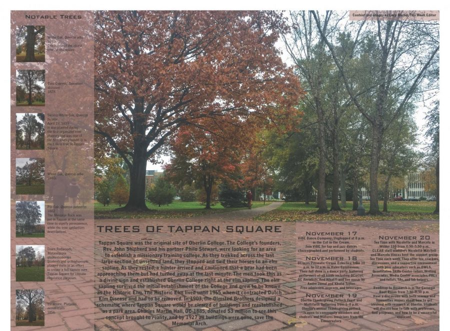 Trees of Tappan Square