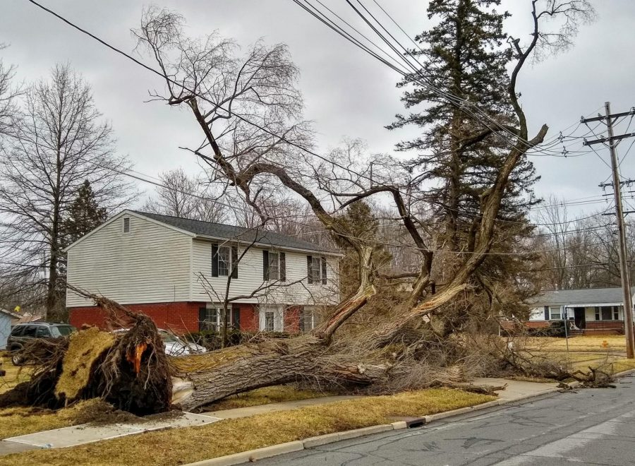 This+tree+on+the+corner+of+Edison+Street+and+Pleasant+Street+was+one+of+many+uprooted+during+last+Sunday%E2%80%99s+wind+storm.
