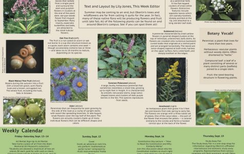 Native Plant Hunt