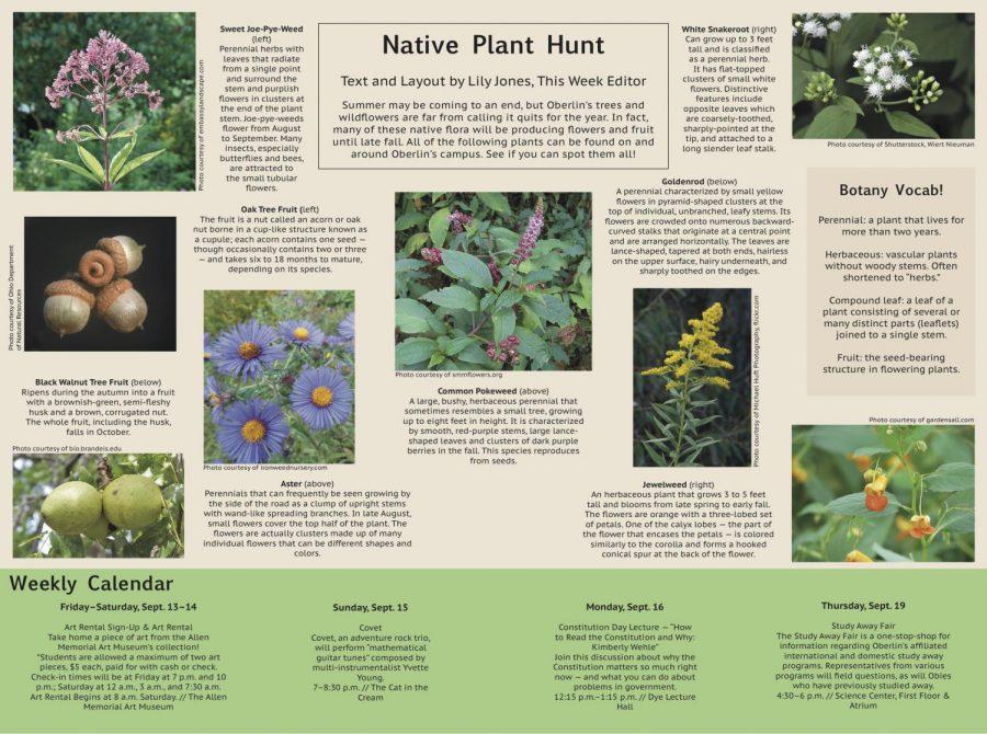 Native Plant Hunt
