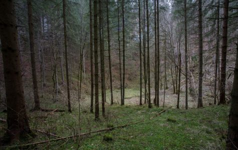 A forest in eastern Germany.