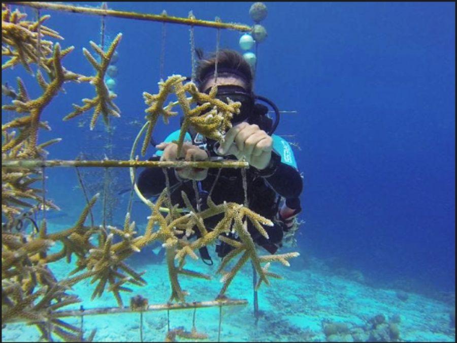 The author SCUBA-diving near Bonaire.