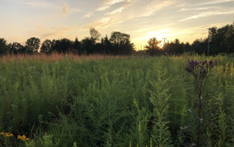 The Western Reserve Land Conservancy is a prairie located on Hamilton Street, just west of the Oberlin Recreation Complex.
