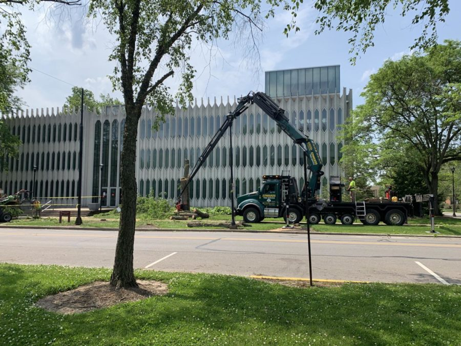 Over the last few weeks, nearly 100 trees have been cut down on campus to complete the Sustainable Infrastructure Program. As part of the plan, all trees will be replaced with trees native to northeast Ohio.
