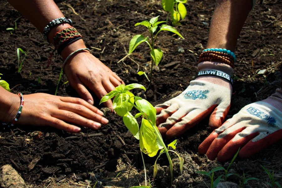 Photo by Rachel Serna-Brown. The hands of Vera Grace Menafee and Imani Badillo in the soil of Vel's Purple Oasis.